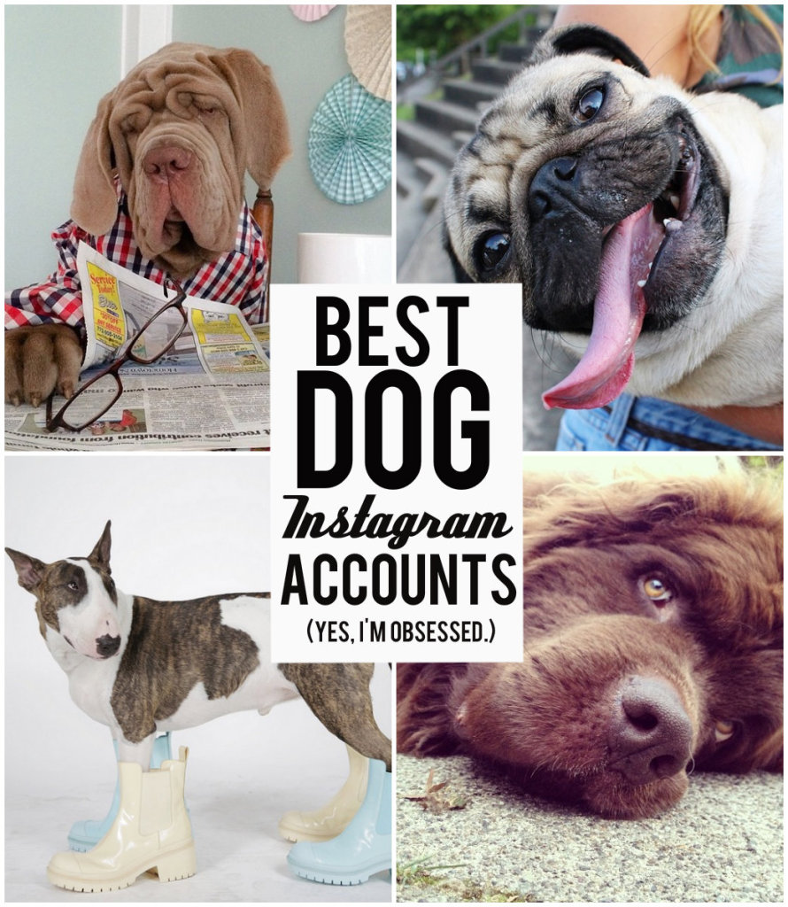 Best Instagram Accounts for Dogs